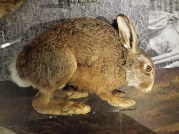 'British Wildlife' case, Living Worlds, Manchester Museum