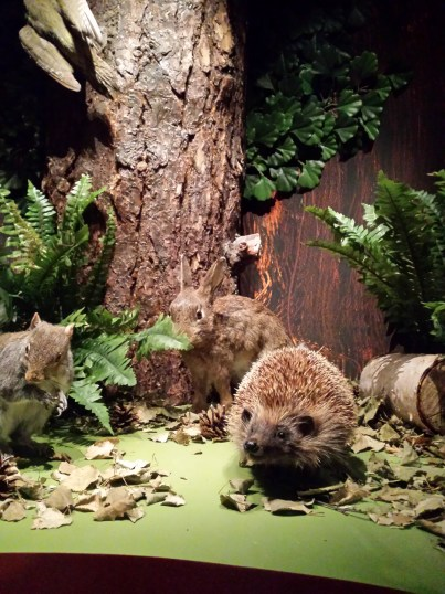 'The Den', Nature Discovery, Manchester Museum