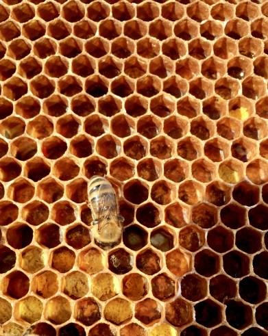 Jason - beehive 4