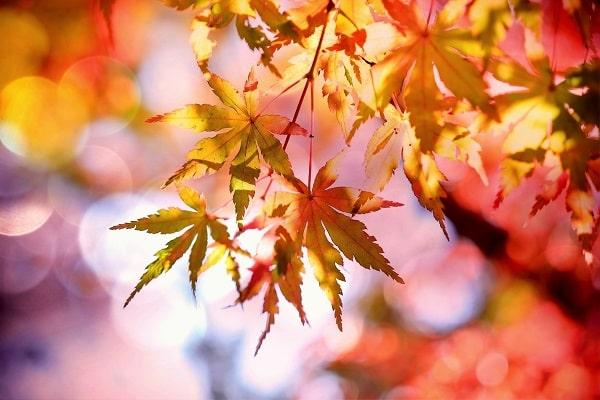 Herbst ist der Frühling des Winters