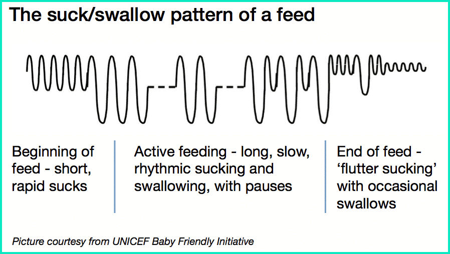 Feeding Pattern of A breastfeed baby | Stork Mama