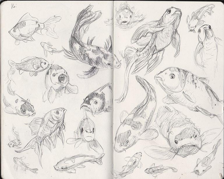 koi sketches