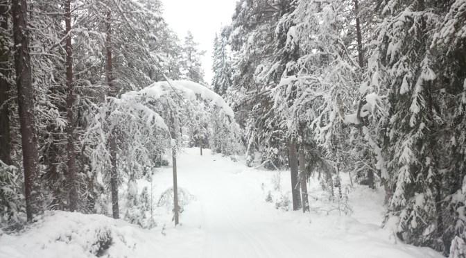 Vinterns första skidtur