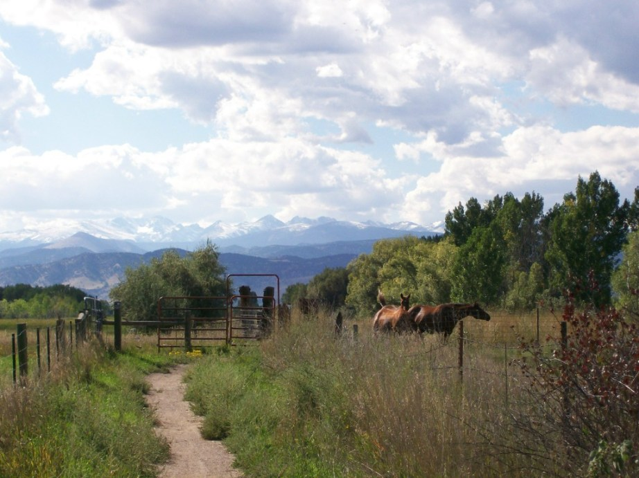 Anything more beautiful than horses & mountains?