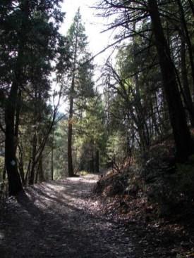"""The Path Less Traveled"" ~ Jenkinson Lake, California"