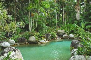 Daintree National Park - Australia
