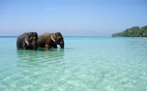 Havelock Island - Andaman Islands