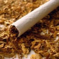 Nikmatnya Lintingan Tembakau di Medan Operasi