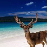 Melancong ke Pulau Peucang