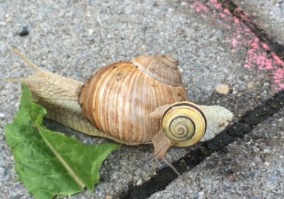 Snail ride - Sophie's snail - Story Snug