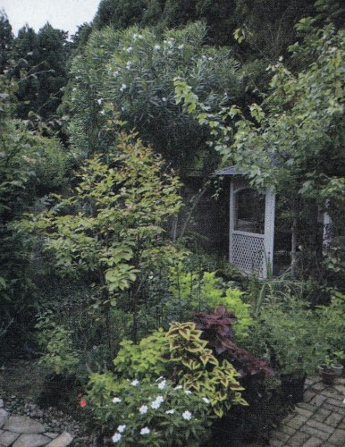 Ono Fuyumi's garden