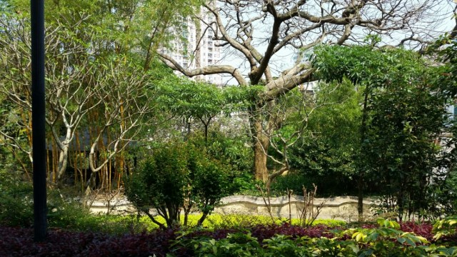 Trees in the Luis de Camoes Garden