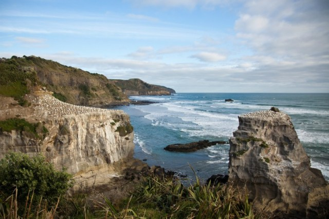 Amazing secret beaches - Muriwai Beach