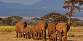elephants safari-Kenya and Tanzania Travel Tips You Need To Know Before Visiting