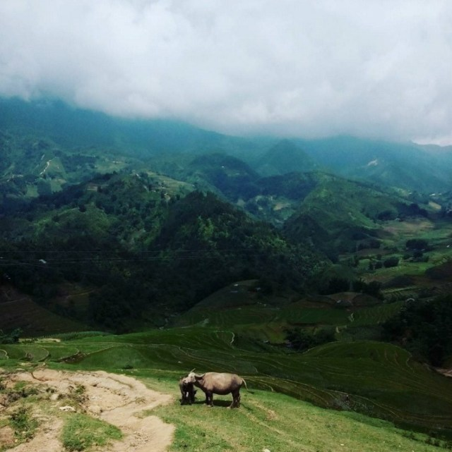 View from the mountains in Sapa | Essential Vietnam Travel Tips You Need To Know Before Visiting