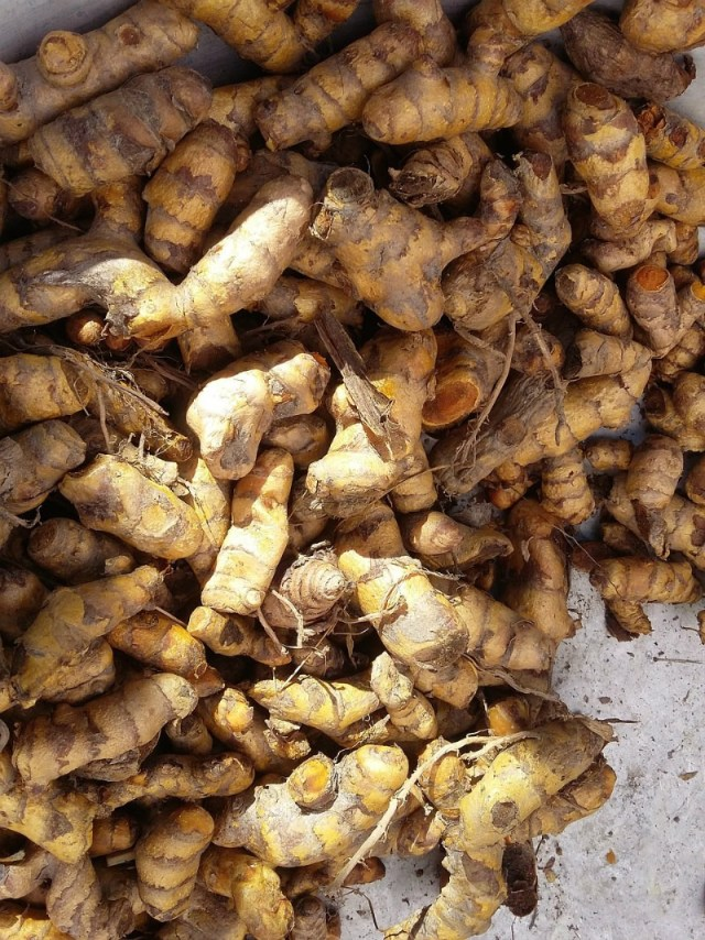 Relieve common traveler health issues like joint pain with turmeric