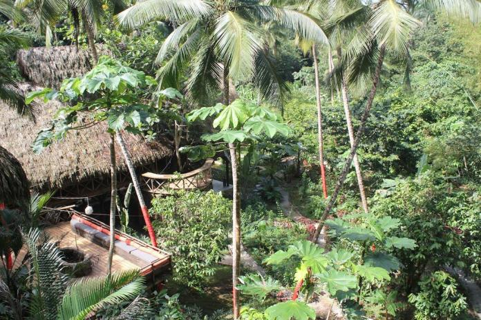 treehouse hotels dominican