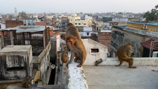 Benaras, also known as Varanasi, is so chaotic yet so peaceful