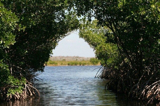 Everglades National Park: Best National Parks To Photograph