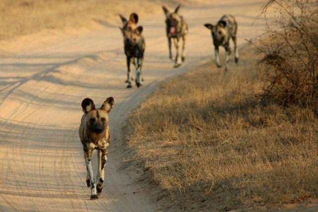 Kruger National Park: Best National Parks To Photograph