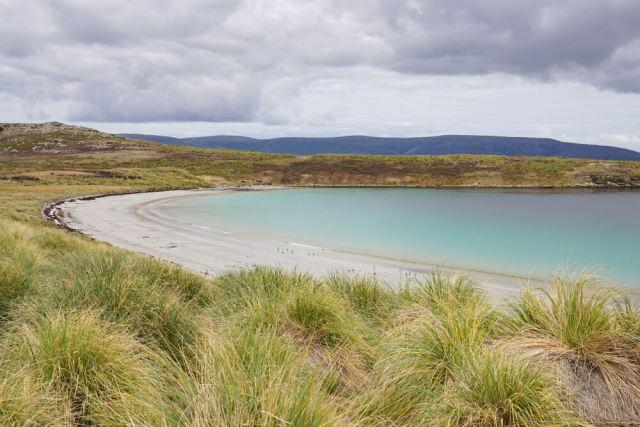 Dyke Bay, Carcass Island - Falkland Islands
