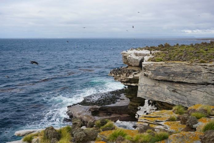 Penguins on rocky cliff face, Falkland Islands