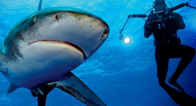 """SHARKS"" MARKETING CAMPAIGN"