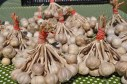 Farmers Market, Garlic