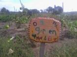 Community Garden -Our First Garden