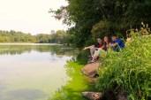 Shoreline at Menomin Park