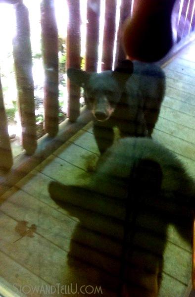 black-bear-sighting-gatlinburg