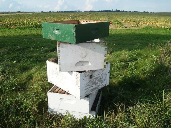 old-drawers-berry-picking-crates