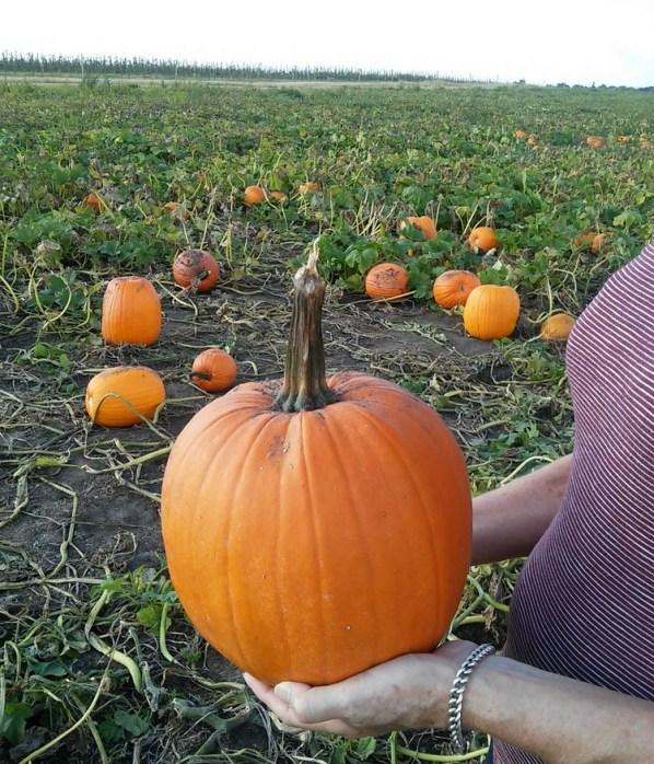 pumpkin-patch-autumn-musings-stowandtellu