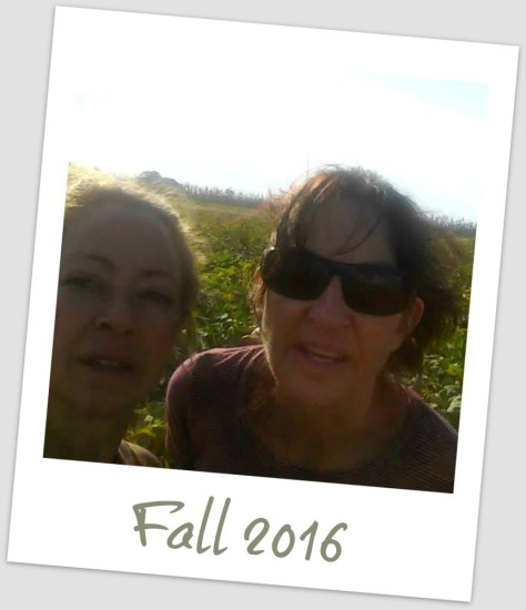 pumpkin-patch-musings-fall-2016
