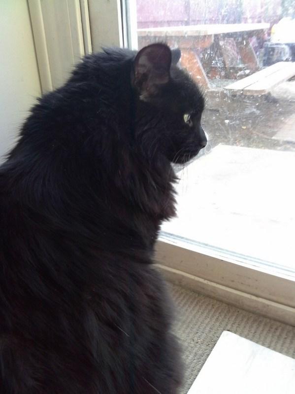black-cat-mane