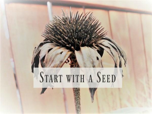 start-with-a-seed-challenge-intro-stowandtellu