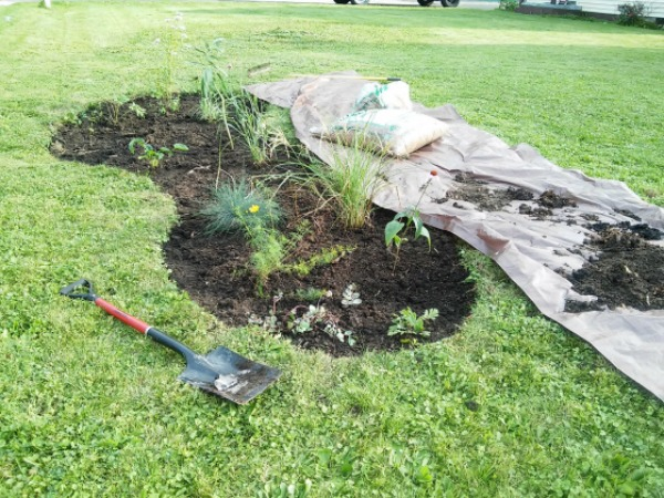 start-with-seed-growing-series-flower-bed