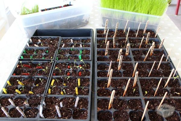 Organize successful seed planting project   Stowandtellu.com