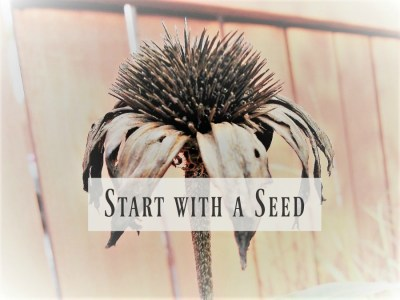 Start with a Seed: Seed Planting Series - Organizing a Seed Planting Project   Stowandtellu.com