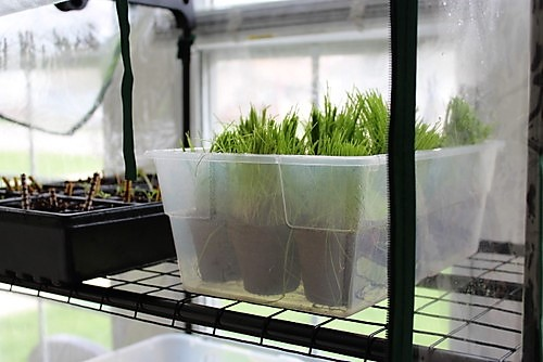 grow-seed-indoors-failure-success