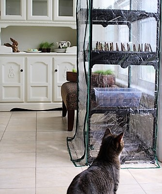 keeping-cats-away-plants-greenhouse