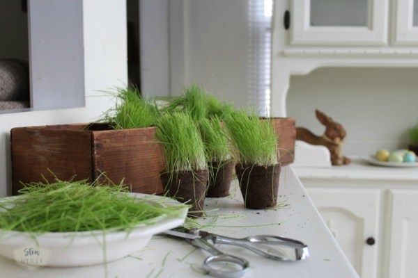 trimming-easter-grass-stowandtellu