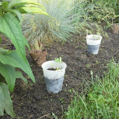 Transplanting and Hardening Off Seedlings – Start with a Seed (part 6)
