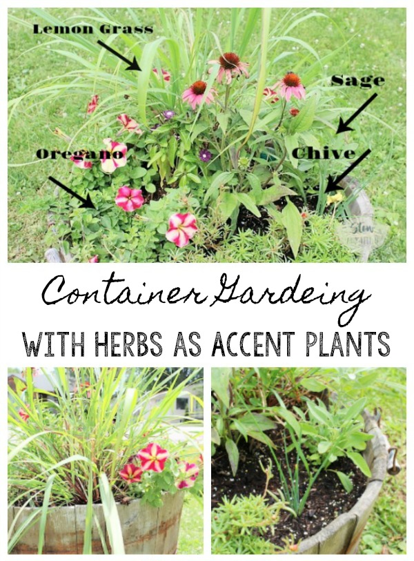 Benefits of container gardening with flowers and herbs as accents plants | tips for container gardening with herbs and flowers | stowandtellu.com