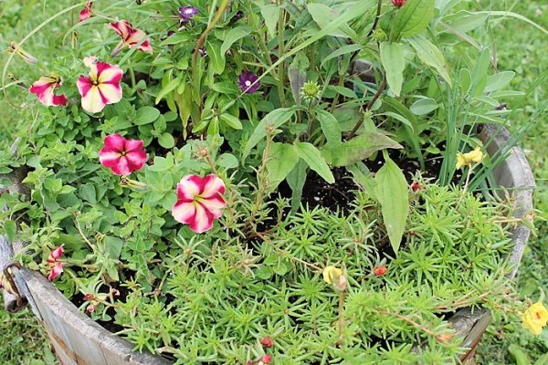Companion container planting with flowers and herbs | stownandtellu
