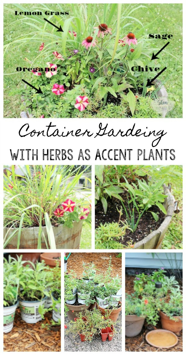 Use herbs as accent plants to flowers for container gardening