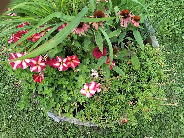 Creative container gardening with flowers and herbs as accent plants | inexpensive container garden ideas | stowandtellu.com