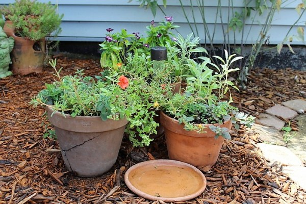 Inexpensive container garden with herbs and flowers combined | stowandtellu