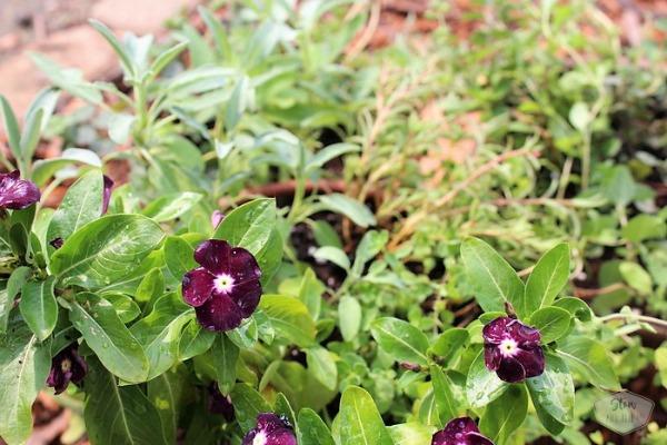 jams-and-jellies-plant