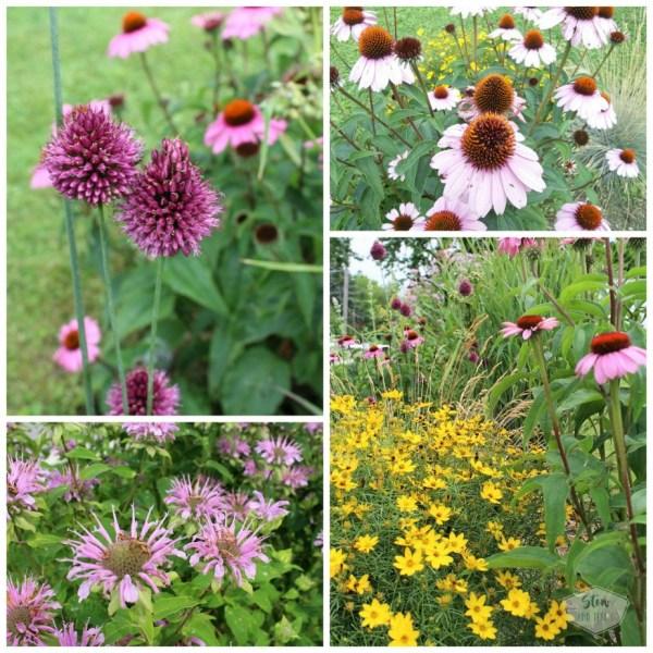 How to start a diy flower garden | starting a native prairie perennial flower bed | stowandtellu.com